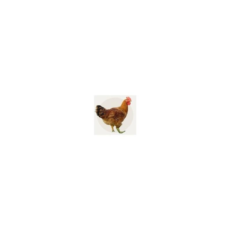 Pollo Eco La RIERA